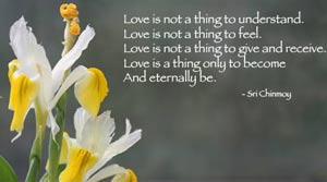 love-is-not-flower