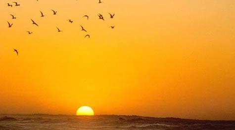sunset-birds-orange-unmesh