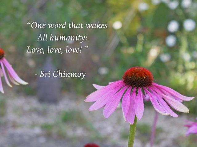 meditacao-guiada-one-word-wakes-humanity-love