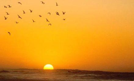 poema-de-sri-chinmoy-sunset-birds-orange-unmesh-500