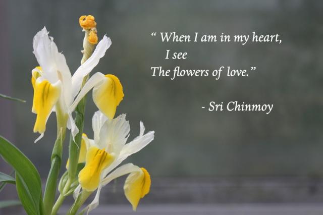 frases bonitas flor
